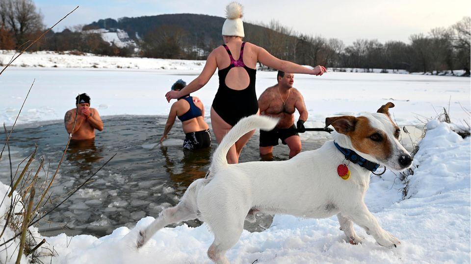 Trencin, Slowakei. Während die Menschen Eisbaden gehen, zieht es dieser Hund vor, an Land zu bleiben. In der Slowakei herrschen aktuell Minusgrade knapp unter dem Gefrierpunkt.
