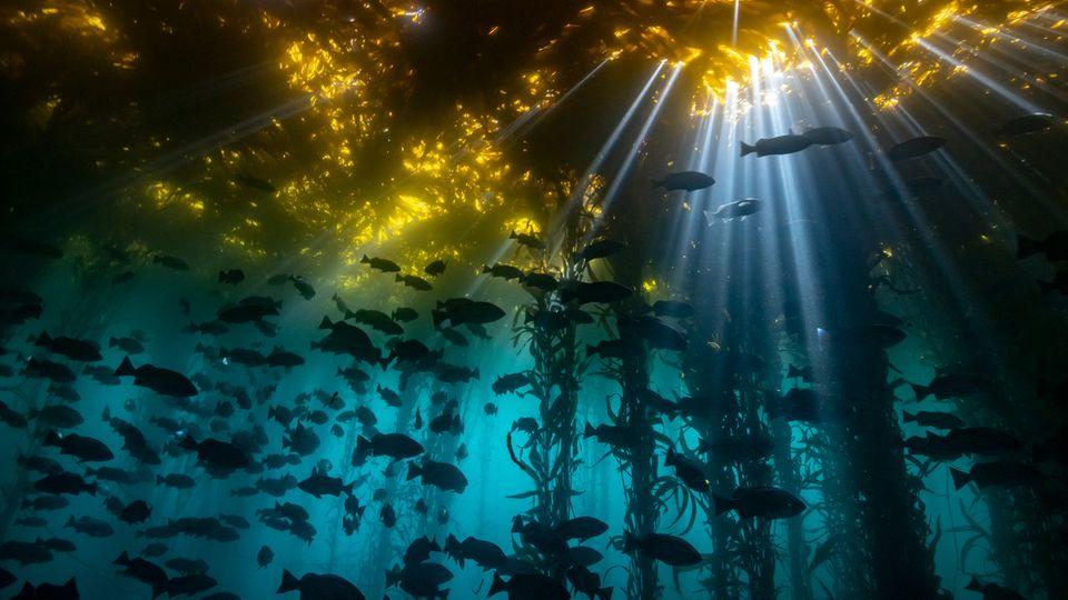 Foto: Jon Anderson/Ocean Art 2020 Contest