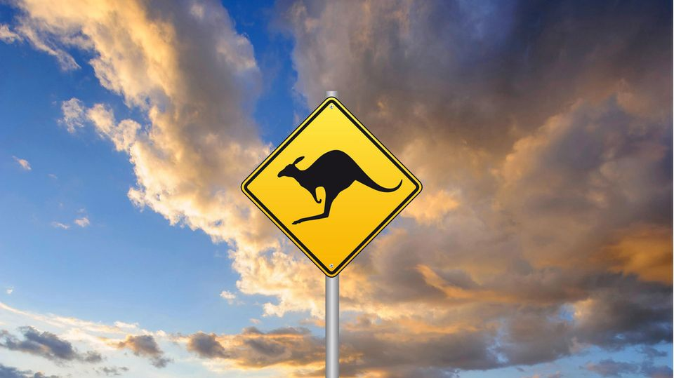 In Australien wurde ein Muskel-Känguru entdeckt.