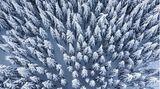 Bild 1 von 15der Fotostrecke zum Klicken:Schneebedeckt sind die Baumwipfelim Wald am Feldberg im Taunus