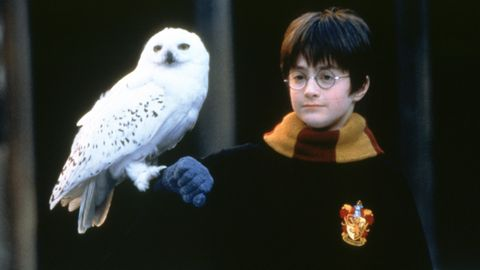 Harry Potter in den Kinofilmen: Daniel Radcliffe