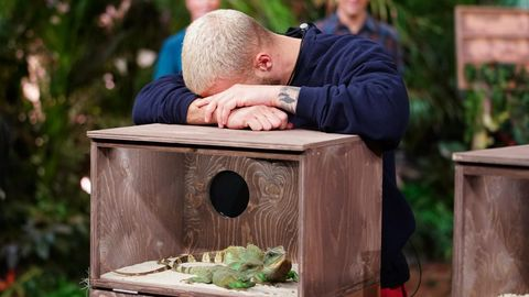 """Es sind nur Echsen: Filip Pavlovic verzweifelt an der letzten Dschungelshow-Prüfung.Bei """"Qualen mit Zahlen"""" müssen die Kandidaten die Anzahl an Tieren ertasten, die sich in einer Box befinden. Das Gemeine: Nur die Zuschauer sehen, was für Getier sich in den Behältern tummelt."""