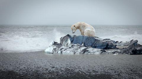 Der Klimawandel zerstört den Lebensraum vieler Menschen und Tiere