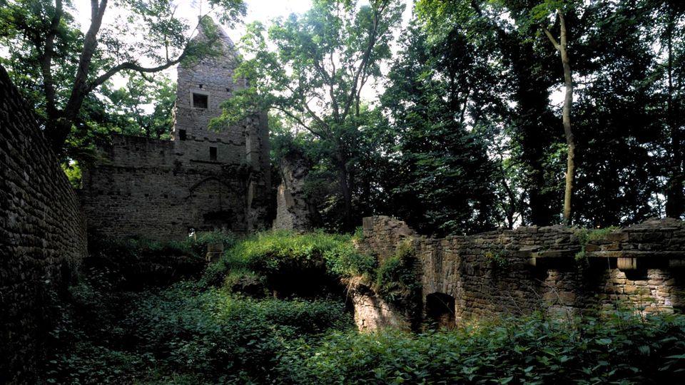 Das verlorene Paradies: Als die Menschen im Mittelalter die riesigen Wälder Deutschlands abholzten