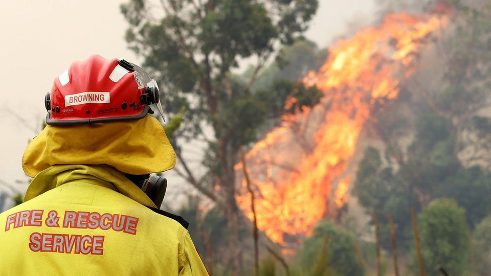 Ein Feuerwehrmann mit gelber Jacke und rotem Helm steht mit Rücken zur Kamera vor einem brennenden Baum im australischen Busch.