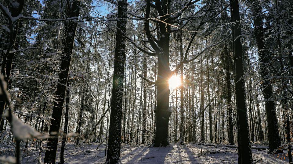 Winterlicher Wald in Sachsen
