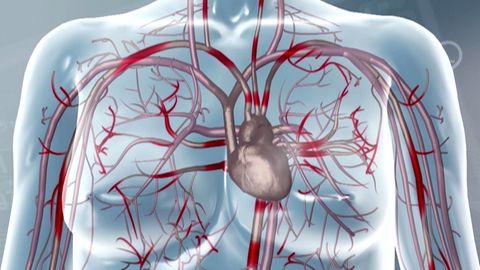 Test in Erlanger Klinik – Herzradar kann Tod vier Tage im Voraus erkennen