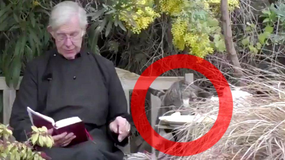 Canterbury Cathedral: Katze klaut Dekan seine Pfannkuchen während Online-Andacht