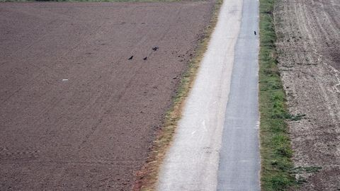Blick auf einen Feldweg