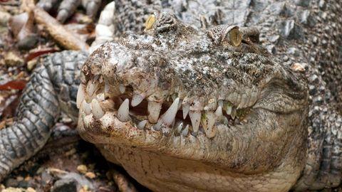 Mann verschwindet beim Angeln – Polizei findet seine Überreste in 4-Meter-Krokodil