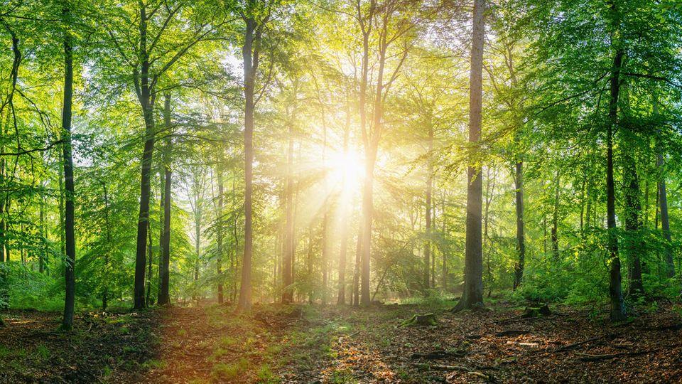 GEO Studiengang Waldwirtschaft Illustration
