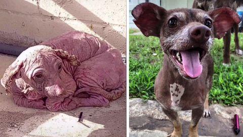 Ein Hund bevor und nachdem er aus einem Tierheim adoptiert wurde