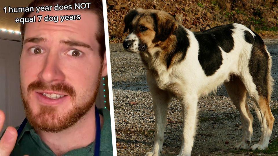 Tierarzt erklärt, dass ein Menschenjahr nicht gleich sieben Hundejahre bedeuten