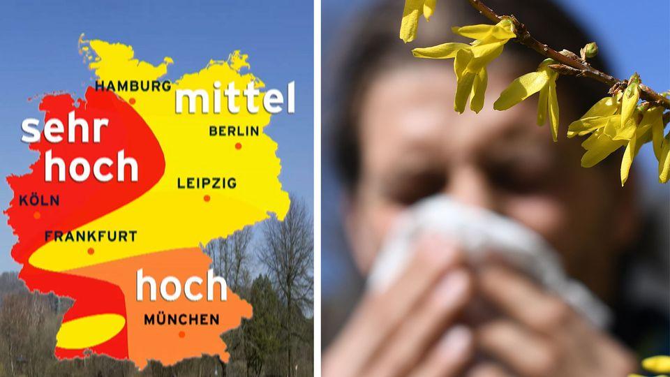 Pollenflug startet wieder