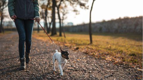 Kontaktbeschränkung für Hundebesitzer
