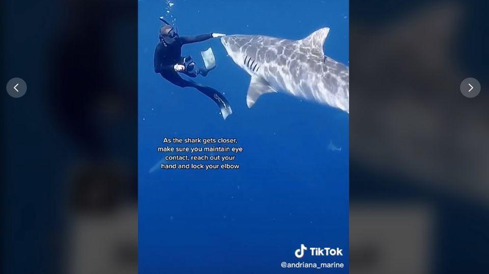 Die Hai-Expertin bleibt ganz ruhig, während der Raubfisch ihr ganz nah kommt