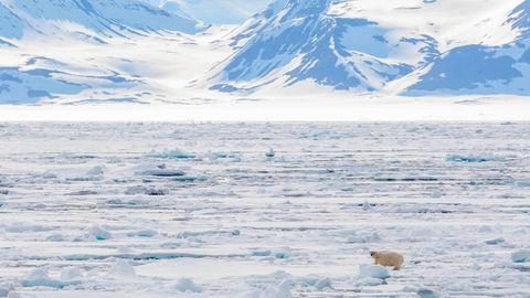 Ein Eisbär steht auf einer ausgedehntenTreibeisfläche im Norden von Spitzbergen