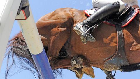Sport kompakt - Herpes-Virus bei Turnierpferden