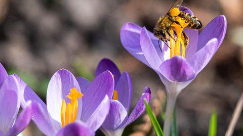Wie pflanze ich Blumen richtig für den Frühling an? – Eine Floristin erklärt