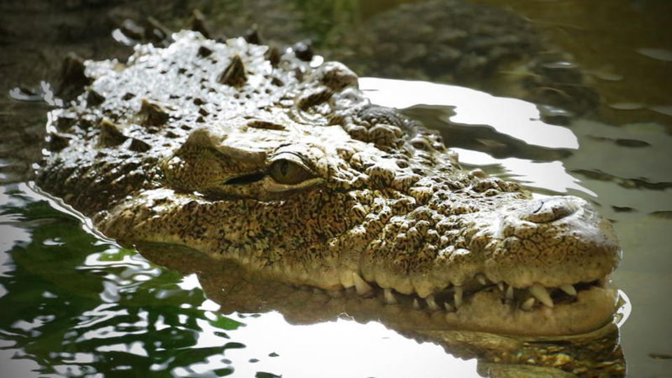 Nach dem Massenausbruch zahlreicher Krokodile in Südafrikas Westkap-Provinz sind Behörden und Anwohner alarmiert (Symbolbild)