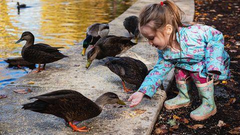 Ein Mädchen füttert Enten