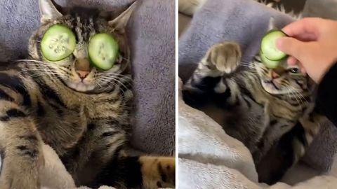 Katze genießt Wellness-Behandlung