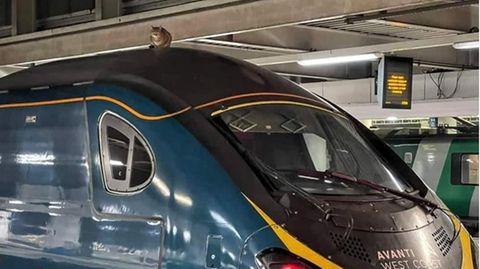 Eine Katze sitzt auf dem Dach eines Zuges