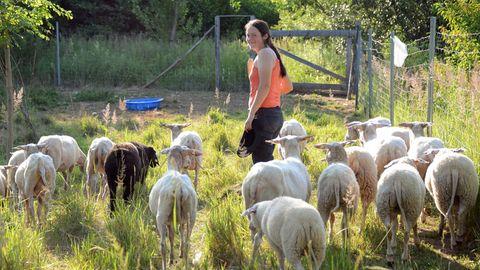 Eine Schäferin geht im Sonnenschein mit ihren Schafen über eine Weide.