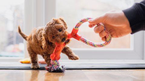 Erstausstattung für Hunde: So fühlt sich der vierbeinige Familienzuwachs wohl.