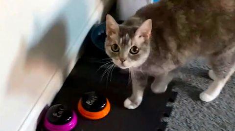 """""""Ich liebe dich!"""" – Katze lernt Sprechen mit Hilfe von elektronischen Buttons"""