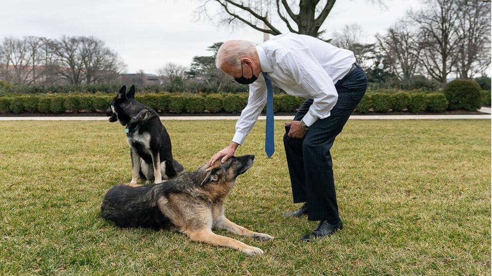 """US-Präsident Joe Biden und seine Schäferhunde """"Major"""" und """"Champ"""""""