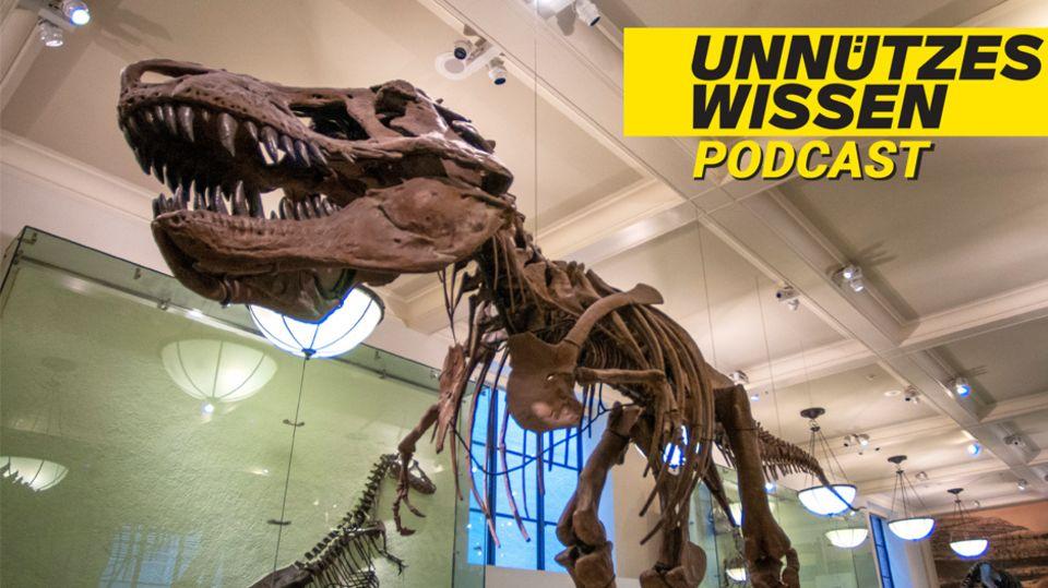 Unnützes Wissen:Dinosaurier lebten deutlich länger auf der Erde als Menschen