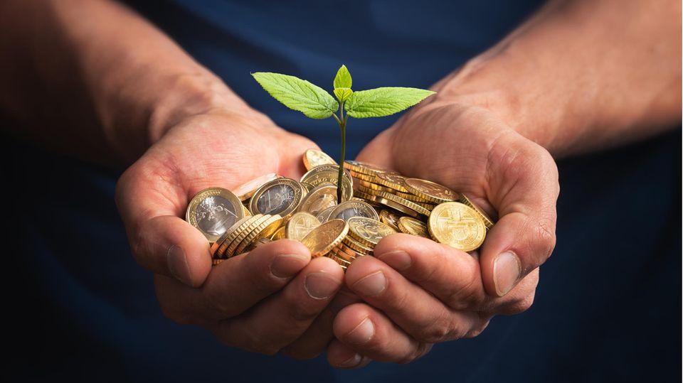 Geld liegt in der Hand und daraus wächst eine Pflanze