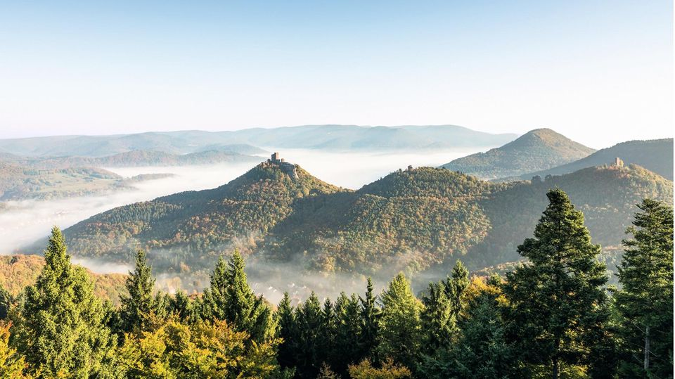 """Der zweiteiligeFilm """"Der Pfälzerwald rund ums Jahr"""" führt durch das Biosphärenreservat Pfälzerwald und ist der Beweis, """"dasses nicht zwingend notwendig ist, viele tausend Kilometer weit zu reisen, um einen bildstarken und facettenreichen Reisefilm zu machen."""", so die VDRJ-Jury."""