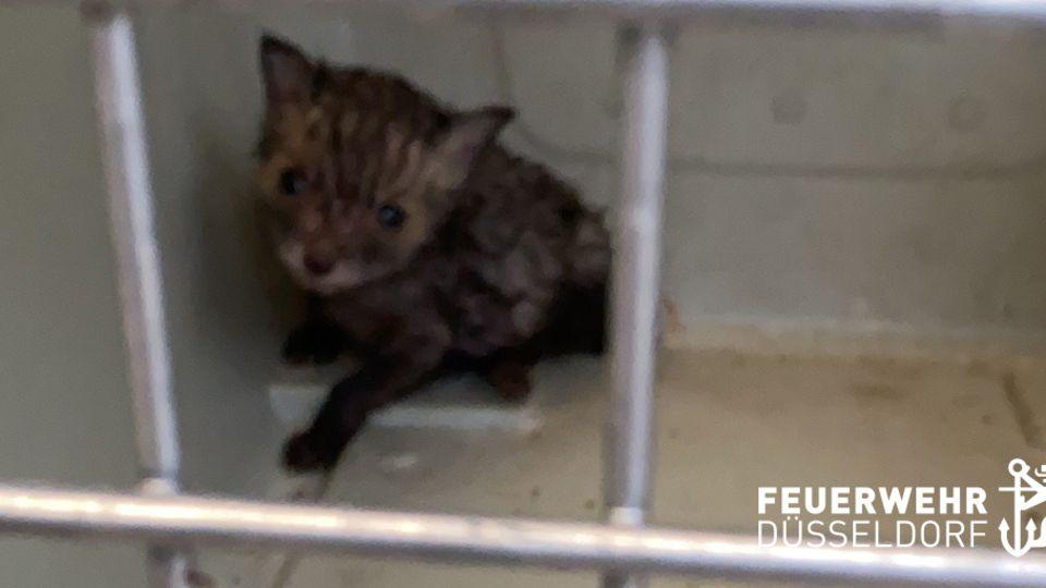 Ein Fuchsbaby ist durch Gitterstäbe eines Käfigs zu sehen