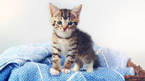 Eine Erstausstattung für Katzen ist wichtig