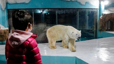 Von hinten ist ein kleines Mädchen mit schwarzen Haaren und rosa Jacke zu sehen, das einen Eisbären in einem Gehege anschaut