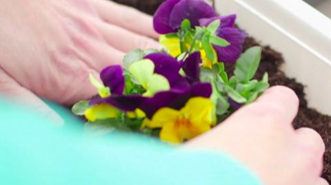 Welche Blumen wachsen auch bei kalten Temperaturen?