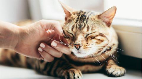 20 lange Jahre wurde in England eine Katze sehnsüchtig vermisst.