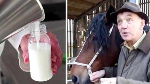 Brite melkt Pferde und verkauft die Milch für 30 Euro pro Liter
