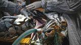 Mülhausen, Frankreich. Auch eine Großkatze muss mal zum Zahnarzt: Baikal, ein 14-jähriger sibirischer Tiger, hat eine Infektion und unterzieht sich deshalb hier im zoologisch-botanischen Park der Stadteiner Zahnoperation.