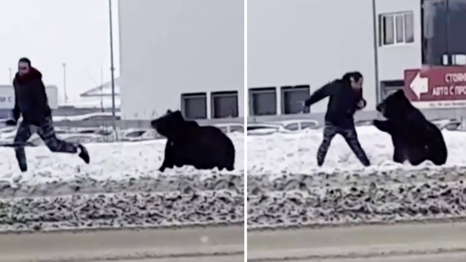 Mann telefoniert gerade – dann macht (s)ein Bär Jagd auf ihn.