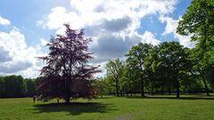 Viel schattiges Grün unter alten Bäumen und ein breites Wegenetz bietet der Volkspark in Hamburg-Altona.