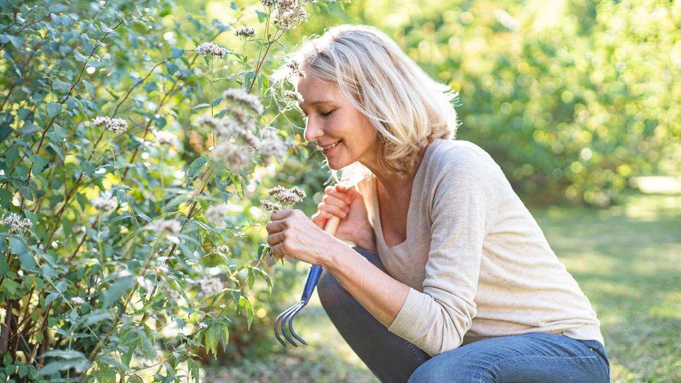 Gartenarbeit: Es drohen sogar Geldstrafen: Warum Hecken im Frühling nicht abgeschnitten werden dürfen