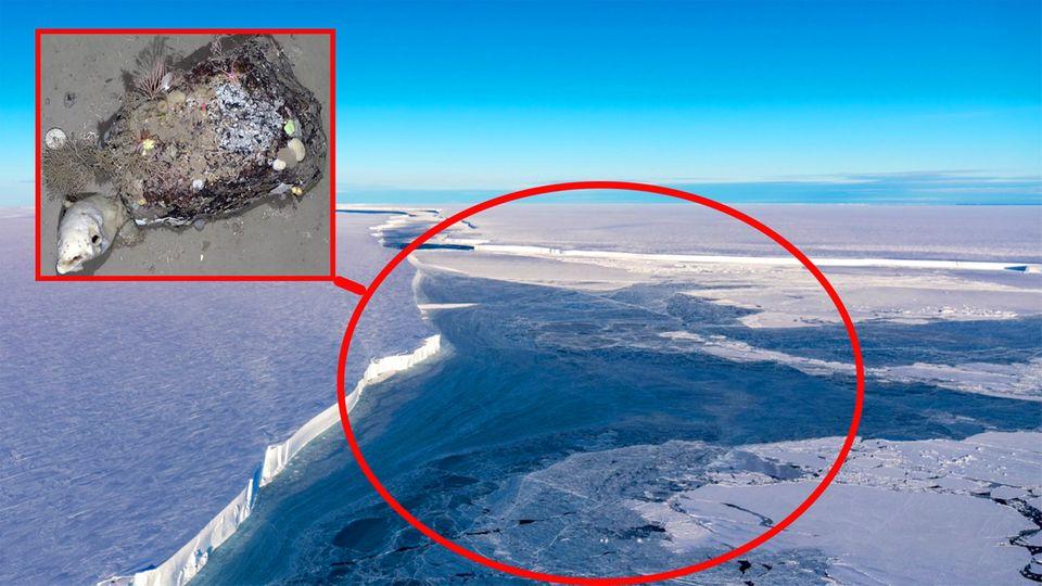 Antarktis: Abgebrochener Eisberg gibt Blick auf faszinierende Kreaturen frei