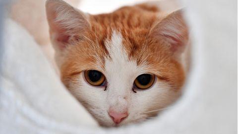 Katze mit rotem Fell liegt in einem Korb.