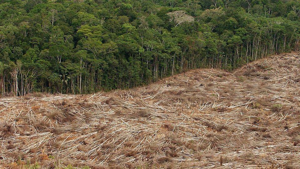 Ein Beispiel für natürlichen Ressourcenverbrauch ist die Abholzung des Regenwalds im Amazonasgebiet