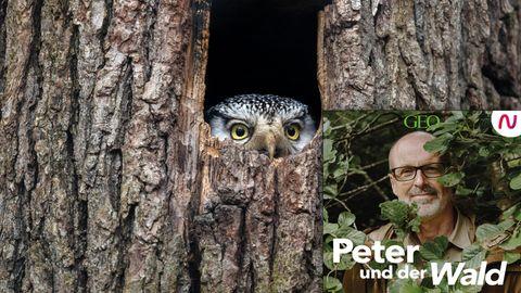 In dieser Podcast-Episode ist Peter auf den Spuren der Tierfotografie.