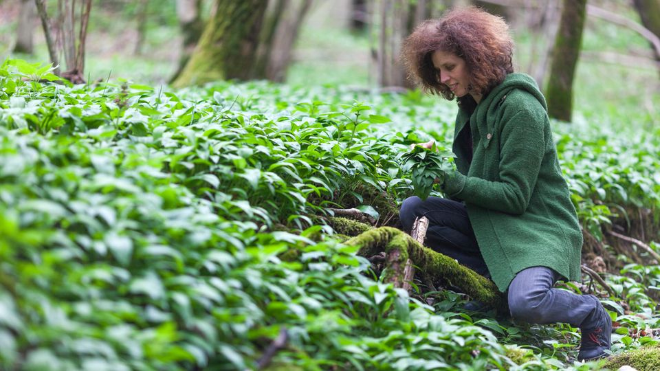 Healthy for the heart and circulation: now they grow everywhere: delicious recipes for pesto, quiche and wild garlic soup