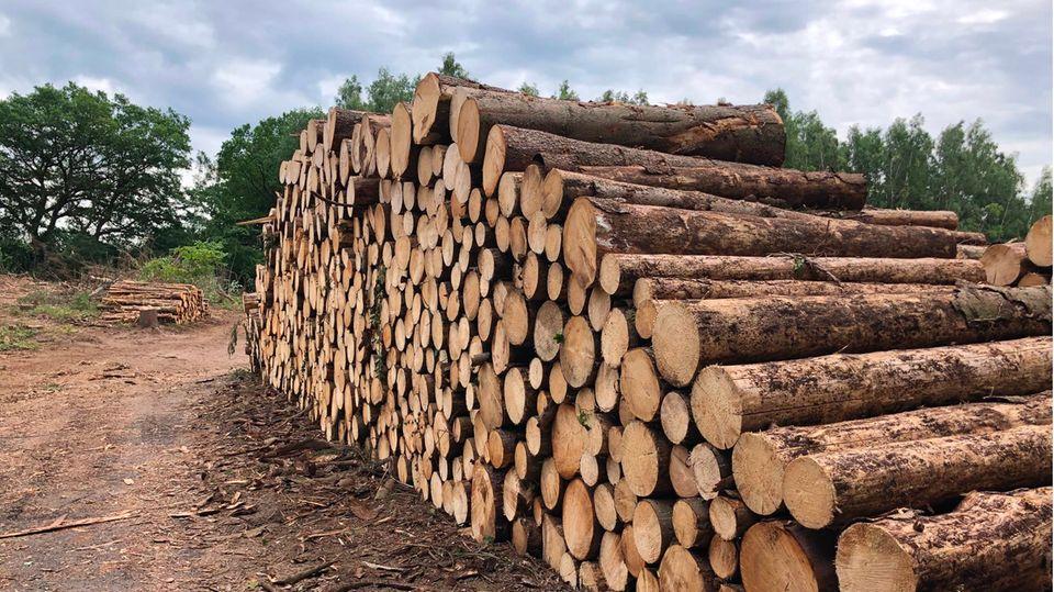 Abholzung und Infektionskrankheiten